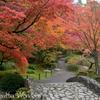 Shutter Wonders Photography Greeting Card - The stone bridge and fall color of Japanese maples in Seattle's Japanese Garden