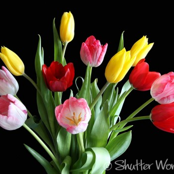 Shutter Wonders Photography Greeting Card - pink, red, and yellow tulip flower bouquet