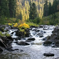 Shutter Wonders Photography Greeting Card - Cascading mountain stream in the Northwest